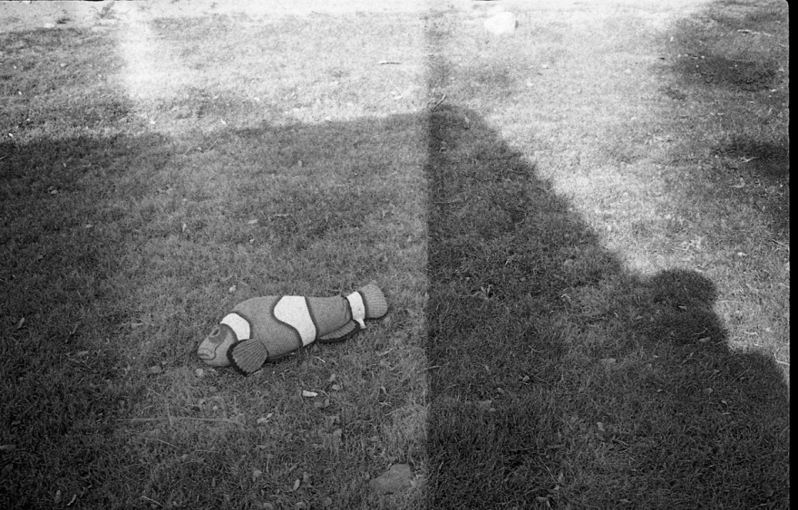 a picture of a toy fish on the grass