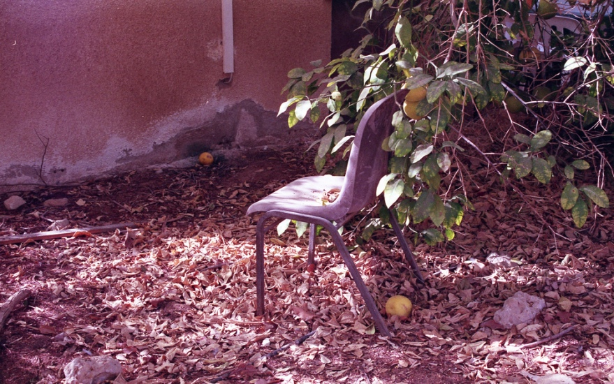a chair under the tree with grapefruits